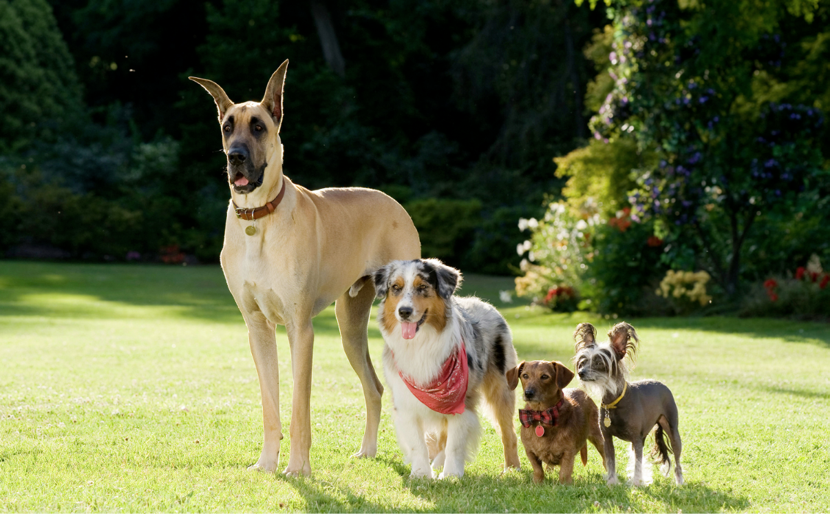 Who Makes Lassie Dog Food